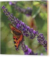 Tortoiseshell Butterfly On Lavender Wood Print