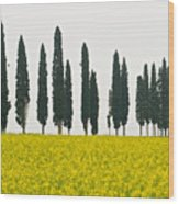 Toscana Cypresses Wood Print