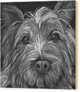 Tosha The Highland Terrier Wood Print