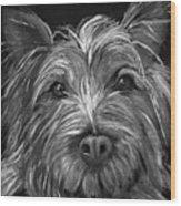 Tosha The Highland Terrier Wood Print