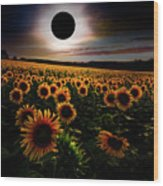 Total Eclipse Over The Sunflower Field Wood Print
