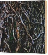 Totally Twisted In Yellow Springs Wood Print