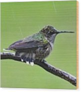 Totally Wet But Beautiful - Ruby-throated Hummingbird Wood Print