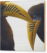 Toucan Play At That Game Wood Print