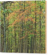 Touch Of Autumn Wood Print
