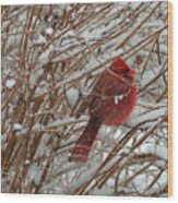 Touch Of Red For An Icy Morning Wood Print