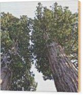 Towering Giants Wood Print