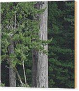 Towering Wood Print