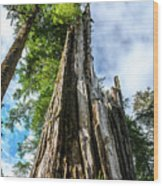 Towering Trees Wood Print