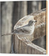 Townsends Solitaire Wood Print