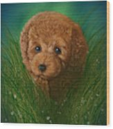 Toy Poodle Puppy Wood Print