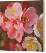 Toyo-nishiki Quince Blooms Wood Print