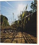 Tracks And Weeds II Wood Print