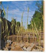 Tracks And Weeds  Wood Print