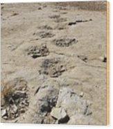 Tracks In The Desert 6 Wood Print