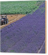 Tractor In A Lavender Field Wood Print