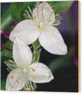 Tradescantia Flower Wood Print