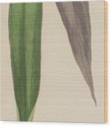 Tradescantia Odoratissima Wood Print