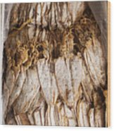 Traditional Sun Dried Squid In Kep Market Cambodia Wood Print