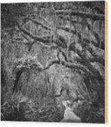 Trail At Cumberland Island Wood Print