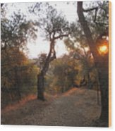 Trail At Sunrise Wood Print