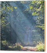Trail In Morning Light Wood Print