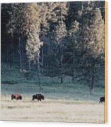 Trail Of Bulls Wood Print