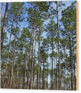 Trail Through The Pine Forest Wood Print