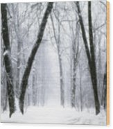 Trail Through The Winter Forest Wood Print