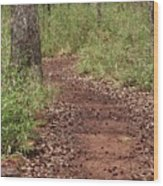Trail To Beauty Wood Print