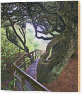 Trail To Copalis Beach Wood Print
