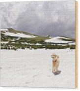 Traildog At Kingston Peak Snow Field Wood Print