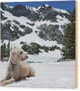 Traildog In Snow At Missouri Lakes Wood Print