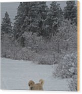 Traildog Loving The Winter Scene In The Flatirons Wood Print