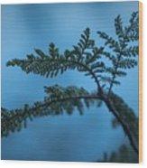 Trailside Foliage Wood Print