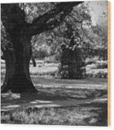 Tralee Town Park Ireland Wood Print