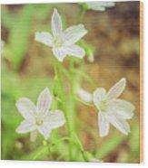 Tranquil Carolina Spring Beauty Wood Print