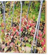 Tranquil Days Of Autumn Wood Print