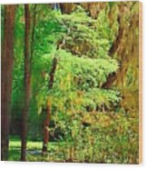 Tranquil Forest Wood Print