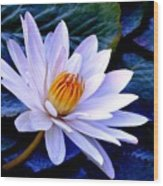 Tranquil Lily Wood Print