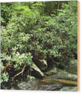 Tranquil Mountain Laurel Stream In The Great Smoky Mountains National Park Wood Print