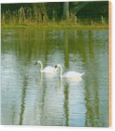 Tranquil Reflection Swans Wood Print