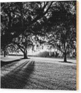 Tranquility Amongst The Oaks Wood Print
