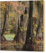 Tranquility In The Cyoress Forest Wood Print