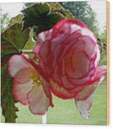 Translucent Begonia Wood Print