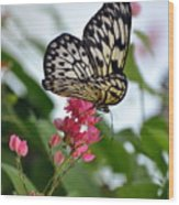 Translucent Butterfly Wood Print