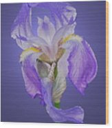 Translucent Iris Wood Print