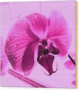 Translucent Purple Petals Wood Print