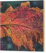Translucent Red Oak Leaf Study Wood Print