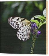 Translucent Wings On A Rice Paper Butterfly Wood Print